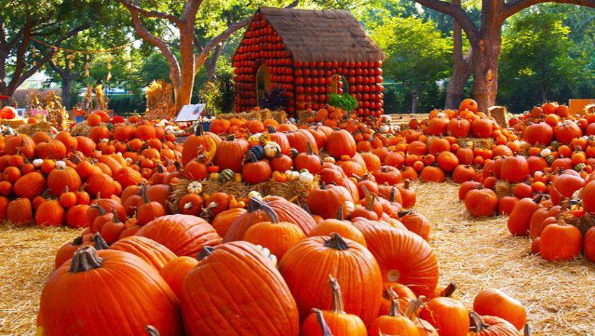http://www.dallasarboretum.org/visit/seasonal-festivals-events/pumpkin-patch